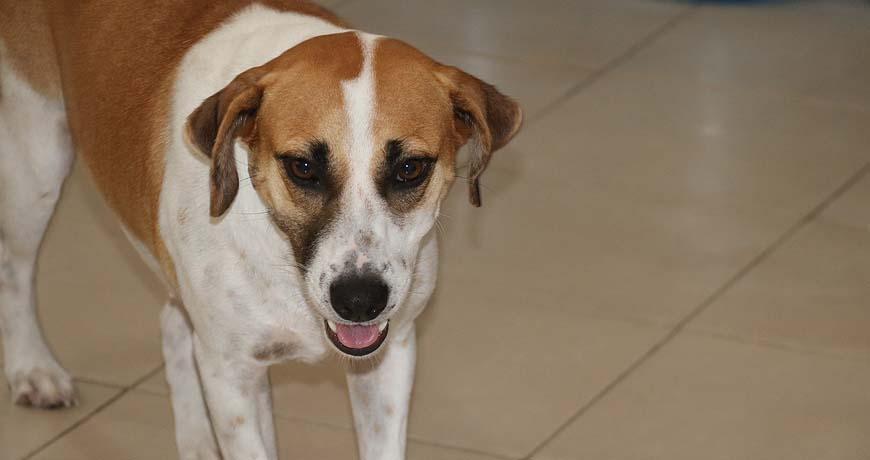 franny dog for adoption ready in mundaca isla animals
