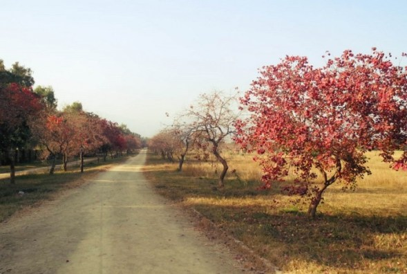 Lovely fall colours in Fatima Jinnah Park Islamabad
