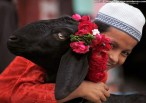 A young Indian Muslim boy smiles with a sacrificial goat on Eid-al-Adha in Allahabad, India on November 7, 2011