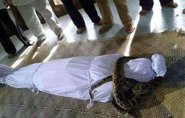 snake in grave
