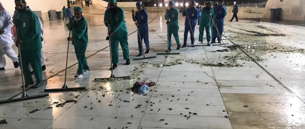 locust in mecca