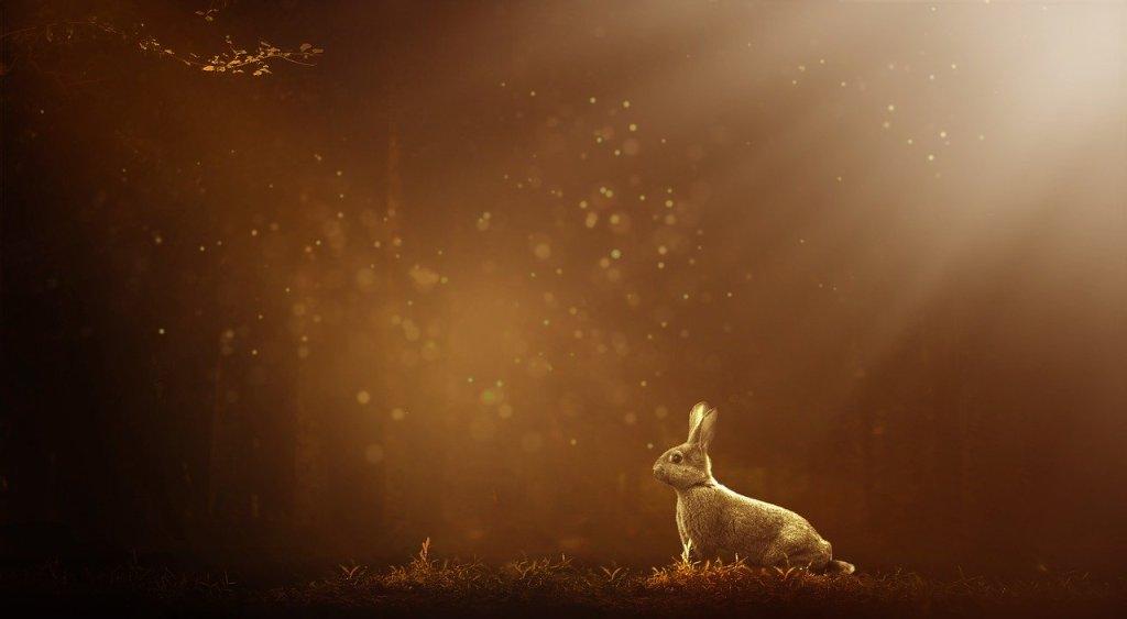 Photo: Rabbit in the woods