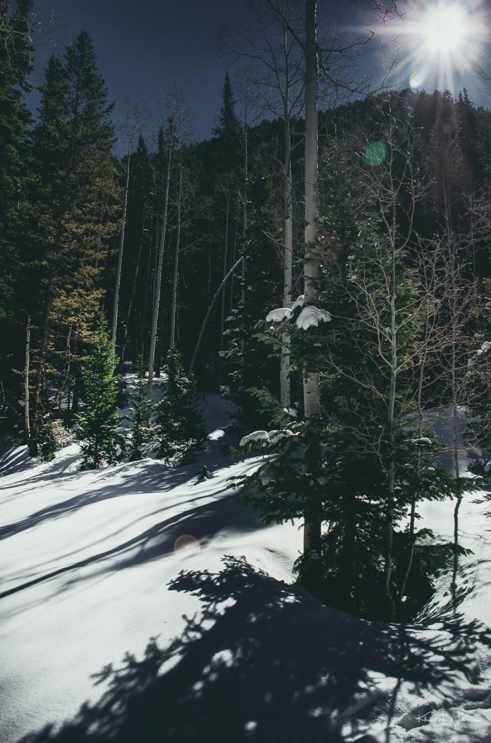 snow, trees, pine,
