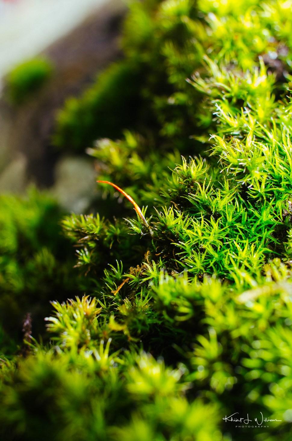 lichen, spring, sourland mountain