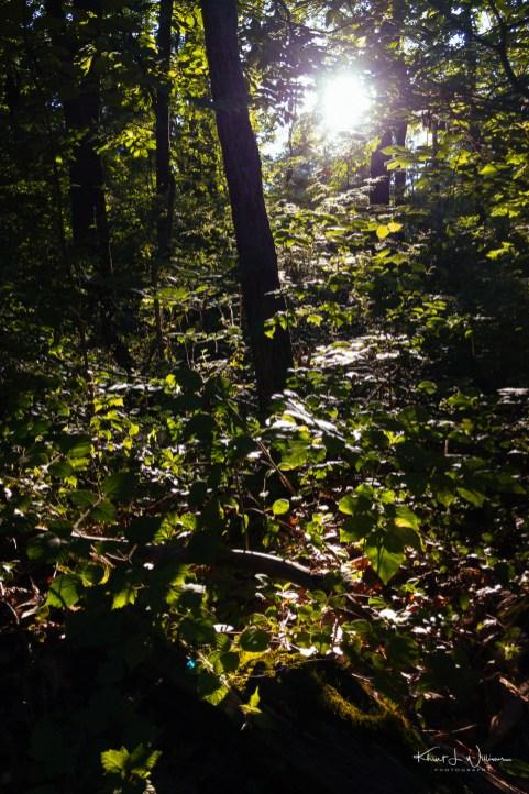 Autumn Hill Preserve