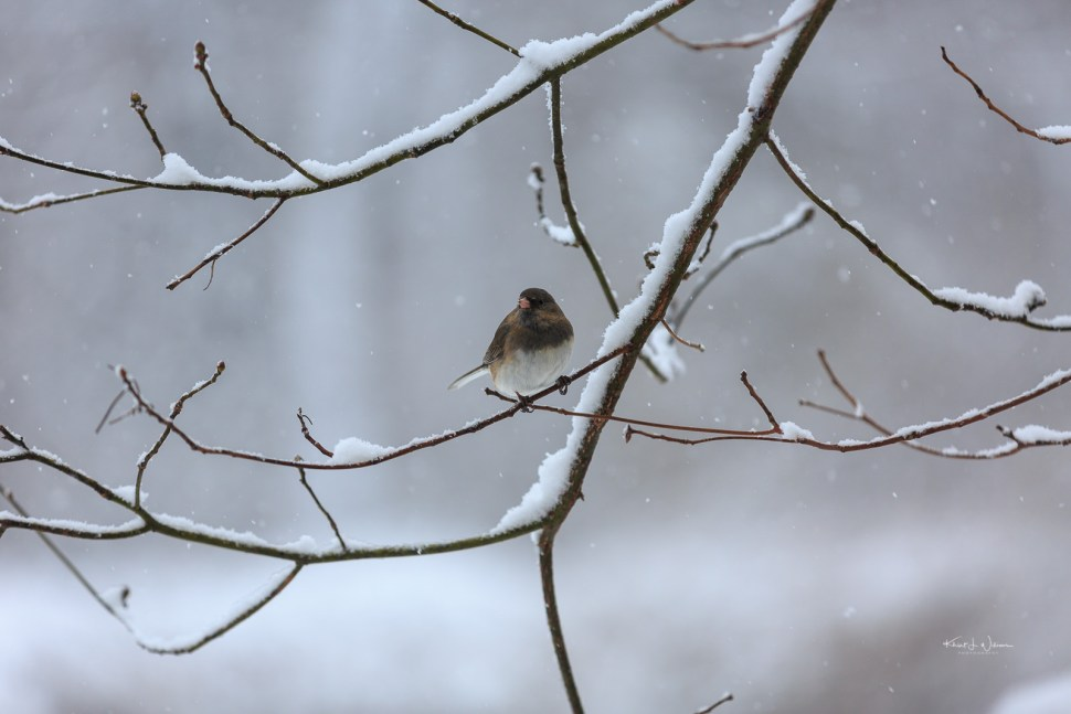 Bird, Snow, Winter, Branch, Tree