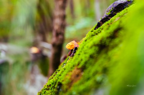 Leaf, Moss, Sourland Mountains