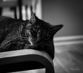 """""""Sleepy Cat"""" — 29 October 2019, Day 25 of 2019 Project 365 — Apple iPhone 11 Pro + iPhone 11 Pro back dual camera 6mm f/2, ISO 500"""