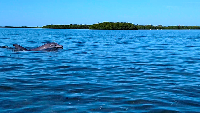 Island Kayak Tours Eco Nature Tour Dolphin
