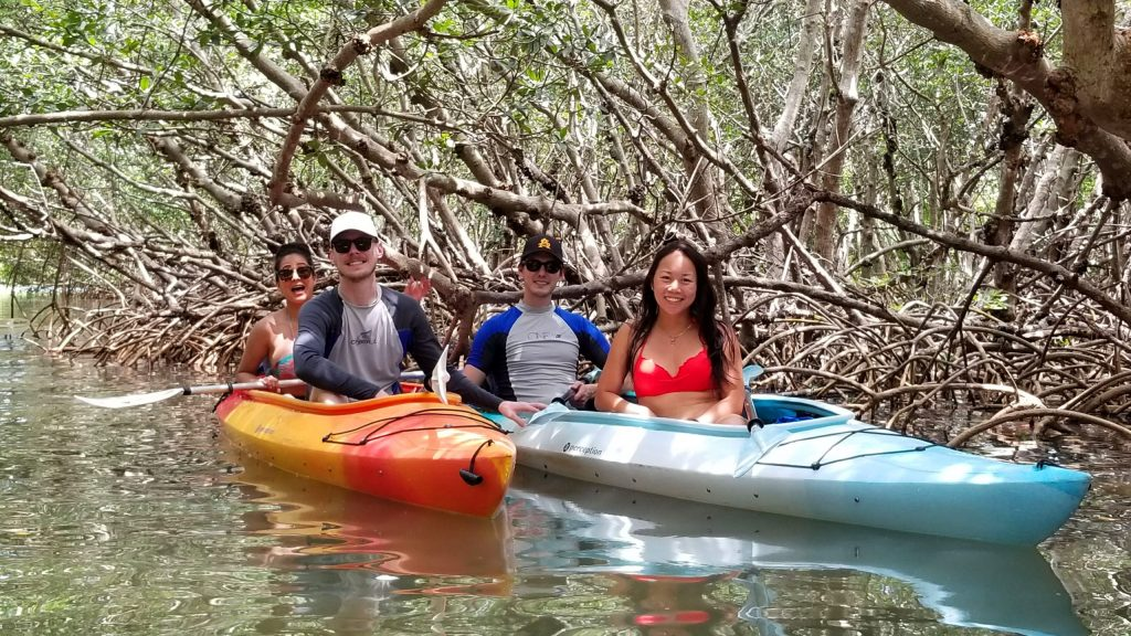 Mangrove tunnels with family