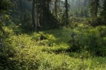 arnica-lake-mount-phillips-0604