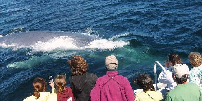 K-12 Education Passenger enjoy a close up whale encounter.