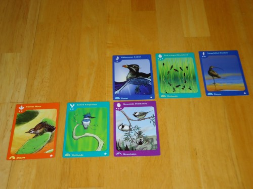 Birds of a Feather Cards 3