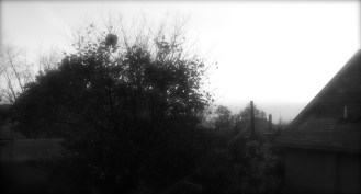 foggy roof