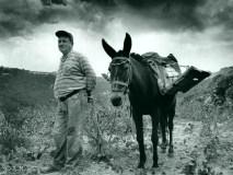 15 farmer mule
