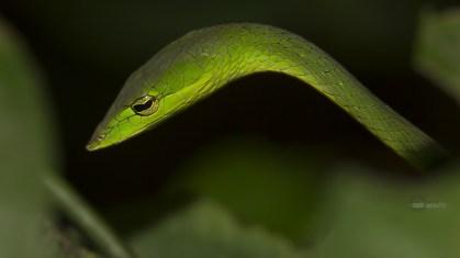 reptiles7
