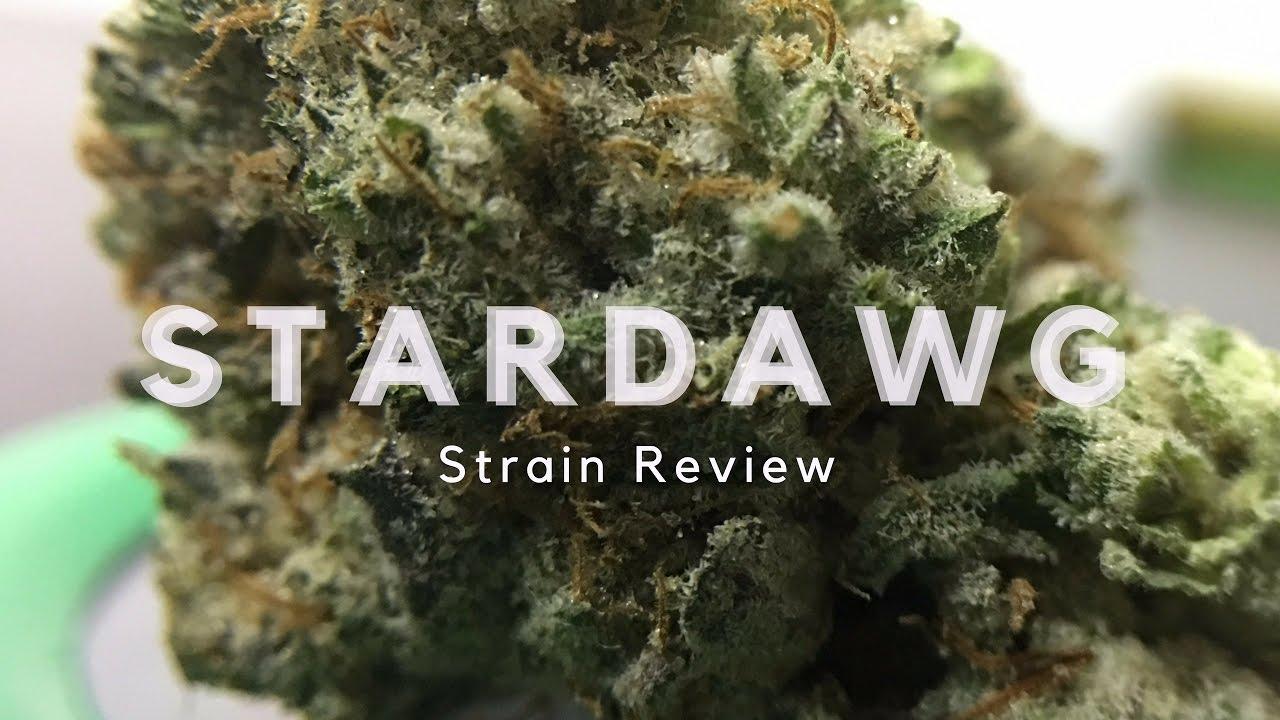 Stardawg Strain Review - ISMOKE