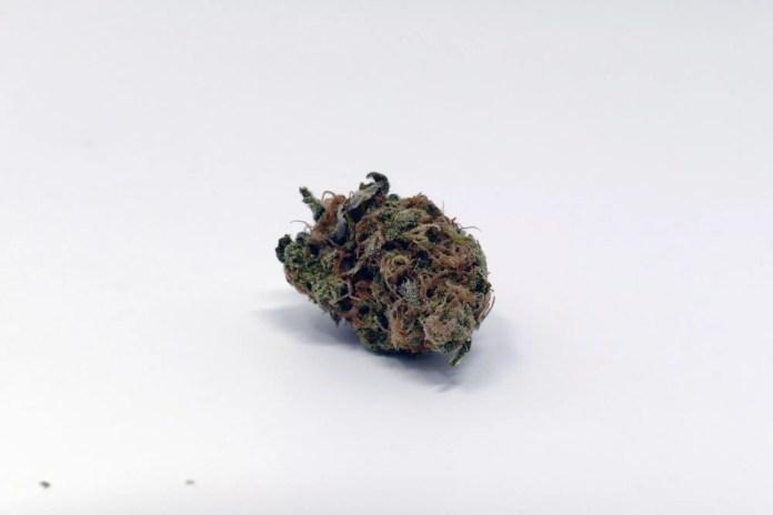 Critical Plus, Critical Plus 2.0 Cannabis Strain Information & Review
