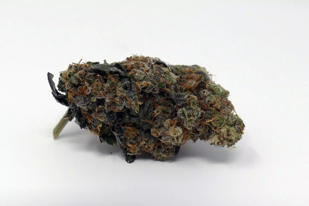 Road Dawg, Road Dawg – Cannabis Strain Review & Information, ISMOKE