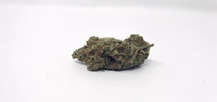 Ginger Glue, Ginger Glue by Black Sheep Botanicals Cannabis Strain Review & Information