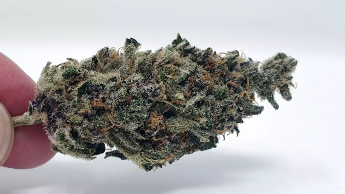 Purple Punch, Purple Punch Cannabis Strain Review & Information