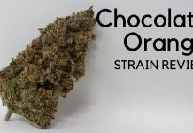 Ice Cream Cake (Seed Junky Genetics) Cannabis Strain Review