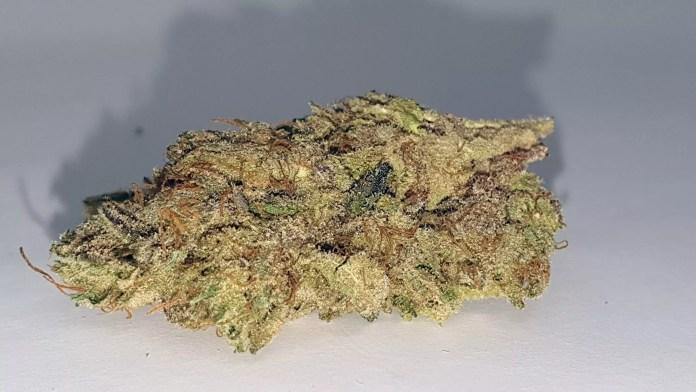 Jaffacito, Jaffacito Cannabis Strain Review & Information