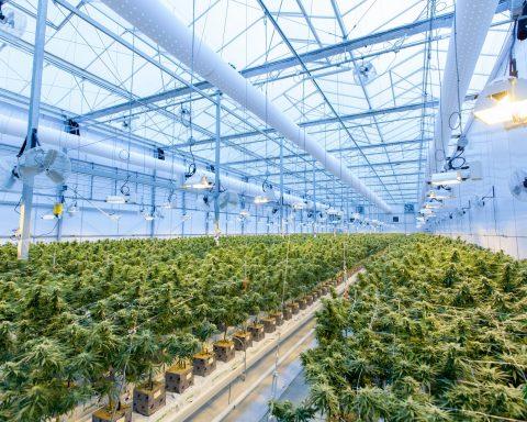 , ISMOKE Home: Cannabis News, Information & Strain Reviews Website