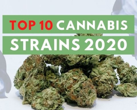 Top 10 Cannabis Strains 2020 - ISMOKE