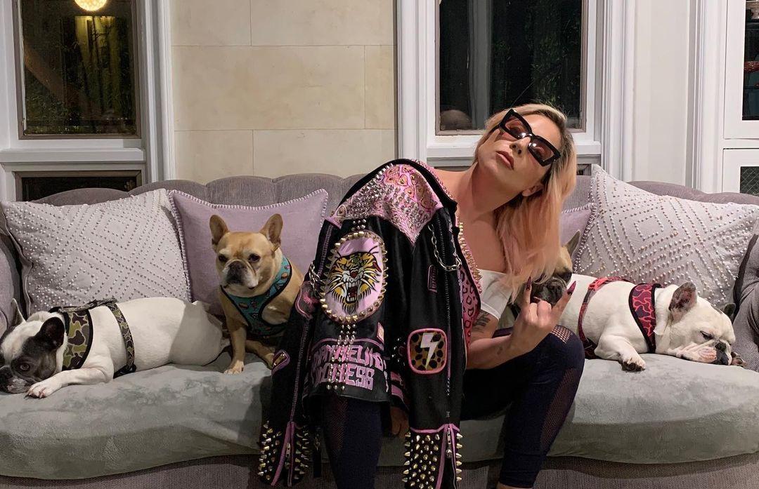 Secuestran a los perros de Lady Gaga tras asalto a su paseador, que fue abaleado en Los Ángeles