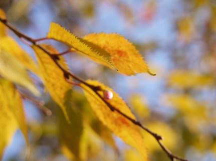 Leaves and Blue November Sky