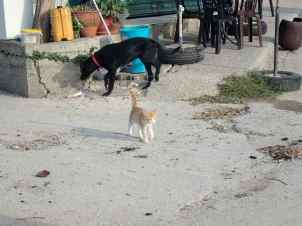 Cat and Dog by the Harbour
