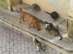 hypatia arme Katzen