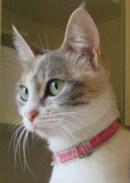 Autor Hypatia Roman gato