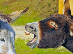 donkey communication