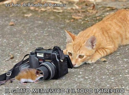 Cat et mus