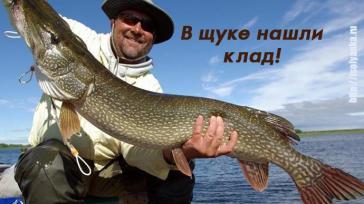 Когда рыбак вытащил эту щуку из воды он и не предполагал, что внутри нее находится целый клад!