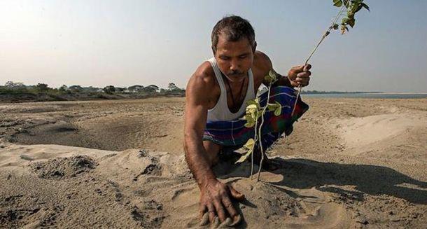 3_result-19   Когда он посадил бамбук в пустыне, его посчитали сумасшедшим! Через 37 лет его имя знали все...