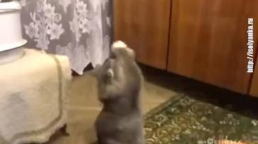 Хозяйка поет - кот на подтанцовке! Уморительное видео.