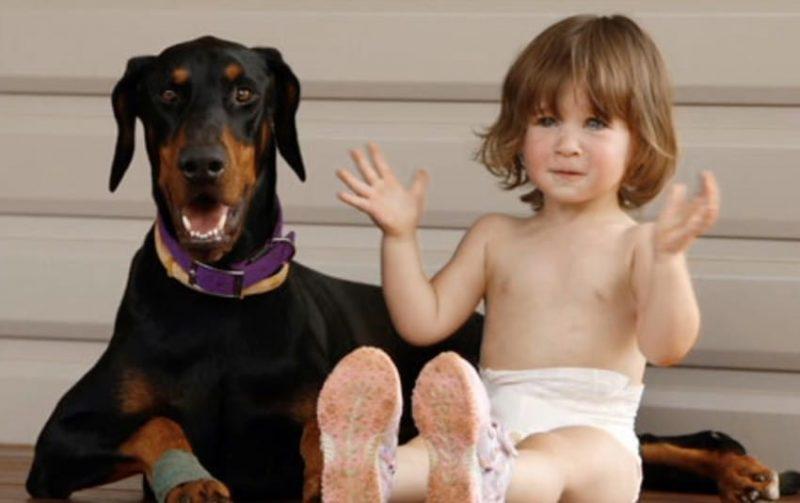 baby-cute-850x534 | Девочка играла с доберманом, вдруг пес оскалился и зарычал...