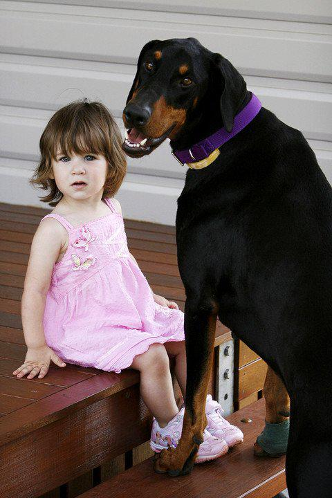 image | Девочка играла с доберманом, вдруг пес оскалился и зарычал...