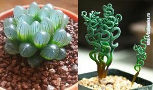 12 необычных комнатных растений, о которых ты узнаешь впервые!