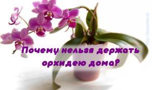 Вот почему нельзя держать орхидею дома!