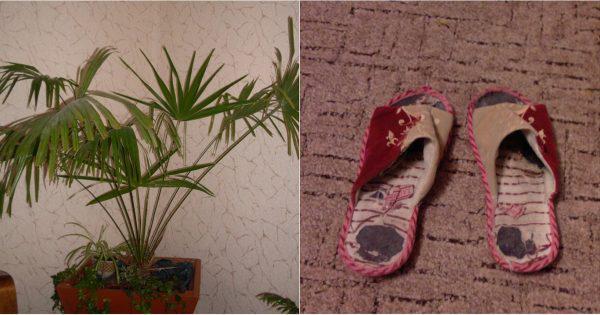 image1-83 | 3 вещи, которые несут негативную энергетику в ваш дом!