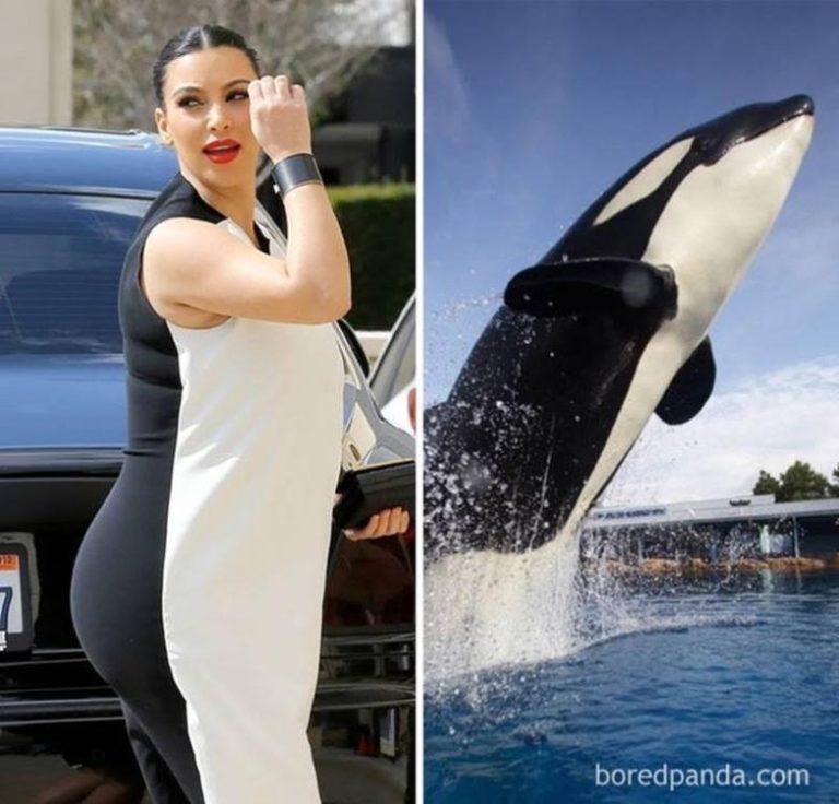 image5-106 | Забавные фото: потрясающее сходство!