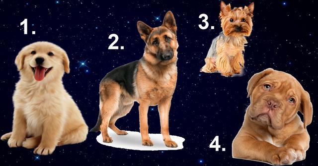 image1-100   В год Желтой Собаки выбранный пес расскажет, какой мужчина для вас идеален