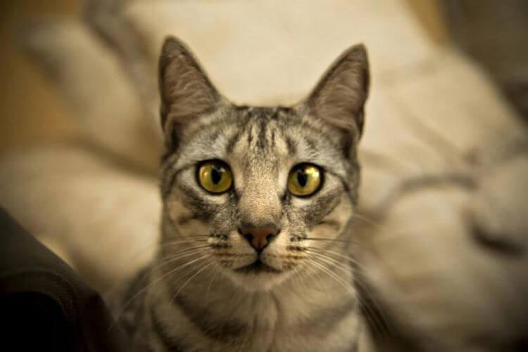 image4-84   Как кошки выражают свою любовь к людям: 10 оригинальных способов