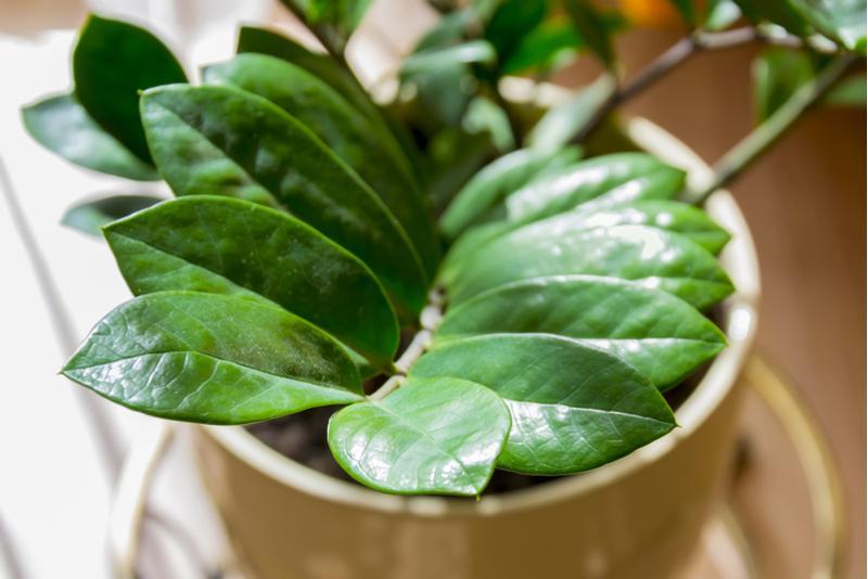 image1-1 | Комнатные растения, которым не требуется много света!