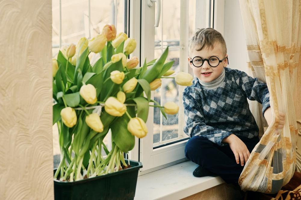 image1-59 | Как вырастить тюльпаны на подоконнике без грунта