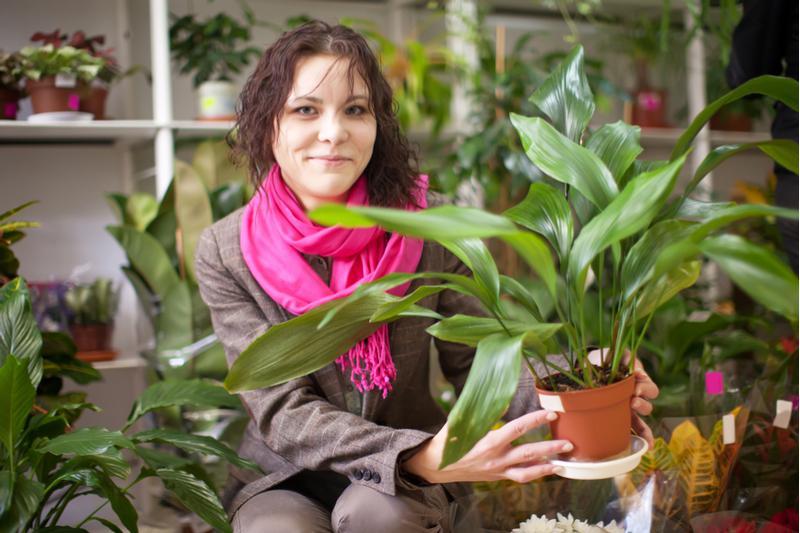 image3-1 | Комнатные растения, которым не требуется много света!